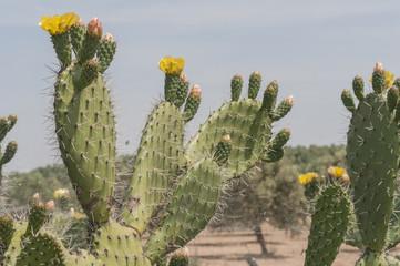 Cactus series 03