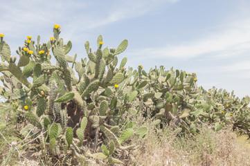 Cactus series 01