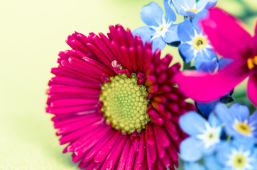 pink daisy and blue flowers