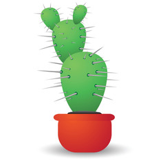 green cactus  isolated on a white background