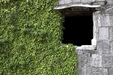 masonry wall with a window with ivy
