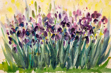Irises.Watercolors