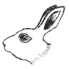 head of rabbit