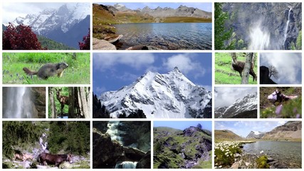 Alps collage. Fauna and flora. Alpine landscapes and animals.
