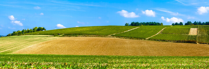 piękny widok na pola uprawne, łąki i krzewy z błękitnym niebem
