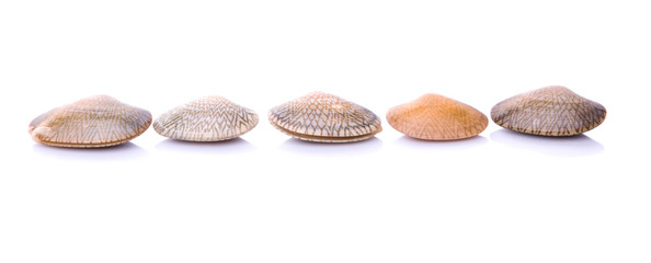 Fresh soft shell clams over white background
