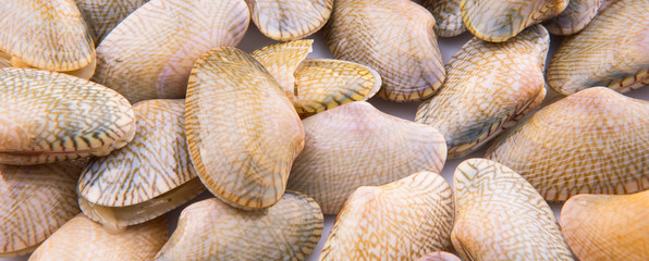 Soft shell clams closeup view