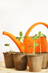 Still life with watering can and seedlings isolated over white