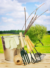 Garden composition with seedlings and tools outdoor