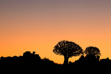 Quiver tree silhouettes
