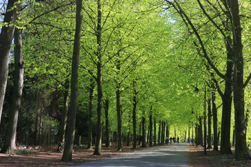 Promenade in Münster