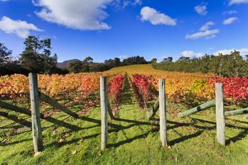 Vineyard Autumn