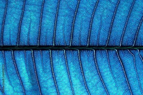 Blue leaf texture