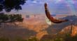 Leinwanddruck Bild - Eagle takes flight over Grand Canyon USA
