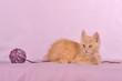 Türkisch Angora Kätzchen rot liegend mit Wollknäuel