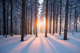 Sunset in the wood in winter period - 64819783