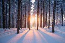 Coucher de soleil dans le bois en période hivernale