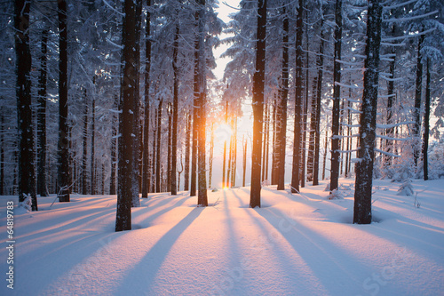 Fotobehang Hemel Sunset in the wood in winter period