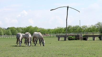 horses on pasture rural landscape