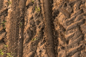 Closeup photo of some mud outdoors