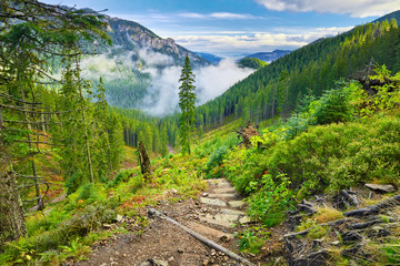 Mountain trail at the forest. The Tatra Mountains, Carpathians.