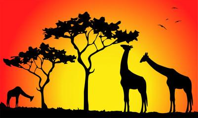 silhouette di giraffe al tramonto nella savana