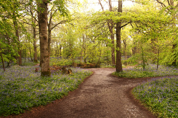 Wet paths through wet woodland