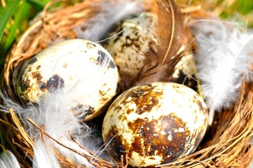 Gniazdo, jajko, pióro, trawa