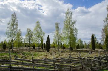 Old pastureland