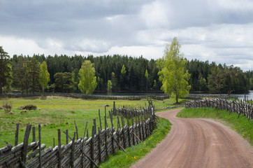 Shiny birches at winding gravel road