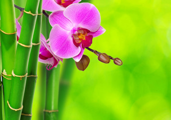green bamboo and orchid