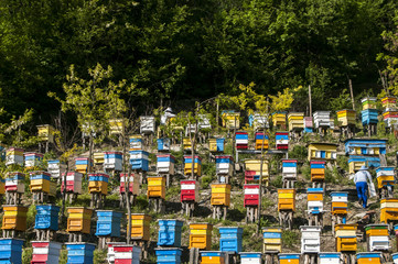 Colored wooden beehives on mountain forest slope