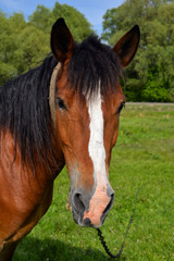 Portrait of horse on background of spring pasture