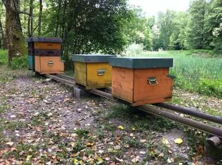 Arnie per apicoltura