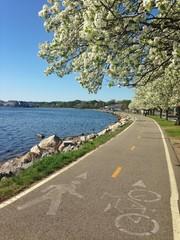 Bike path along the flowering trees and ocean harbor