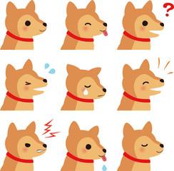 中型犬の喜怒哀楽