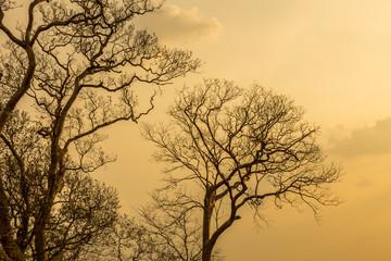 Silhouette Branch