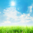 Beauty summer meadow under blue skies