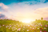 Fototapety Summer evening on the meadow. Abstract environmental backgrounds