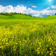Beauty summer day on the meadow, abstract rural landscape for yo