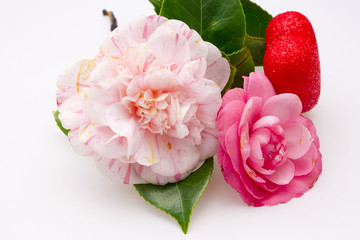 Camellias with heart