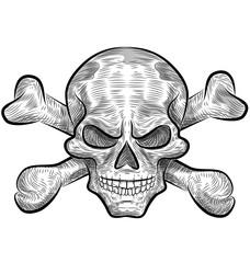 skull sketch design