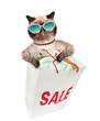 Cat. Shopper. Sales.