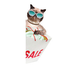 Cat. Shopper. Sales.