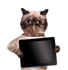 Cat holding a tablet.