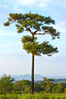 Single tree on the field, beautiful natural summer landscape, pi