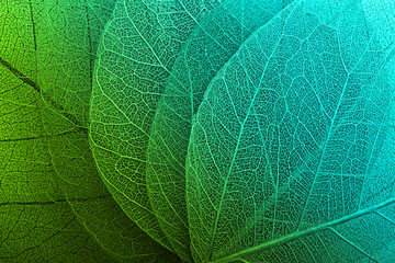 Macro leaves background
