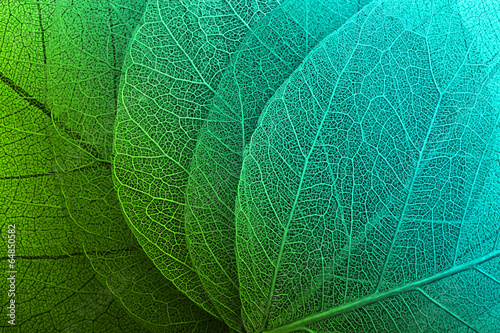 Macro leaves background