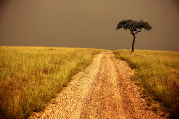 way through the savanna, lone tree
