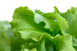 Detail of fresh leaf lettuce with white background